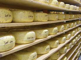 International Award Winning NAtural Pastures cheese ready for market. Photo: Neil Havers
