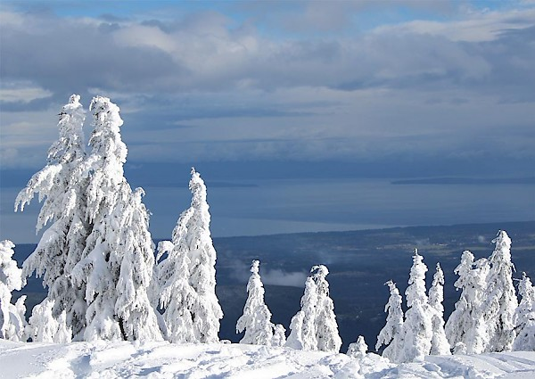 Mount Washington Snow Ghosts overlooking the Comox Valley.