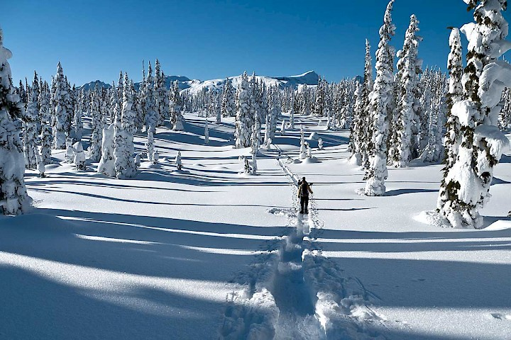 Along side or off the the Mount Washington cross country trails, snowshoeing in Strathcona Provincial Park is growing in popularity