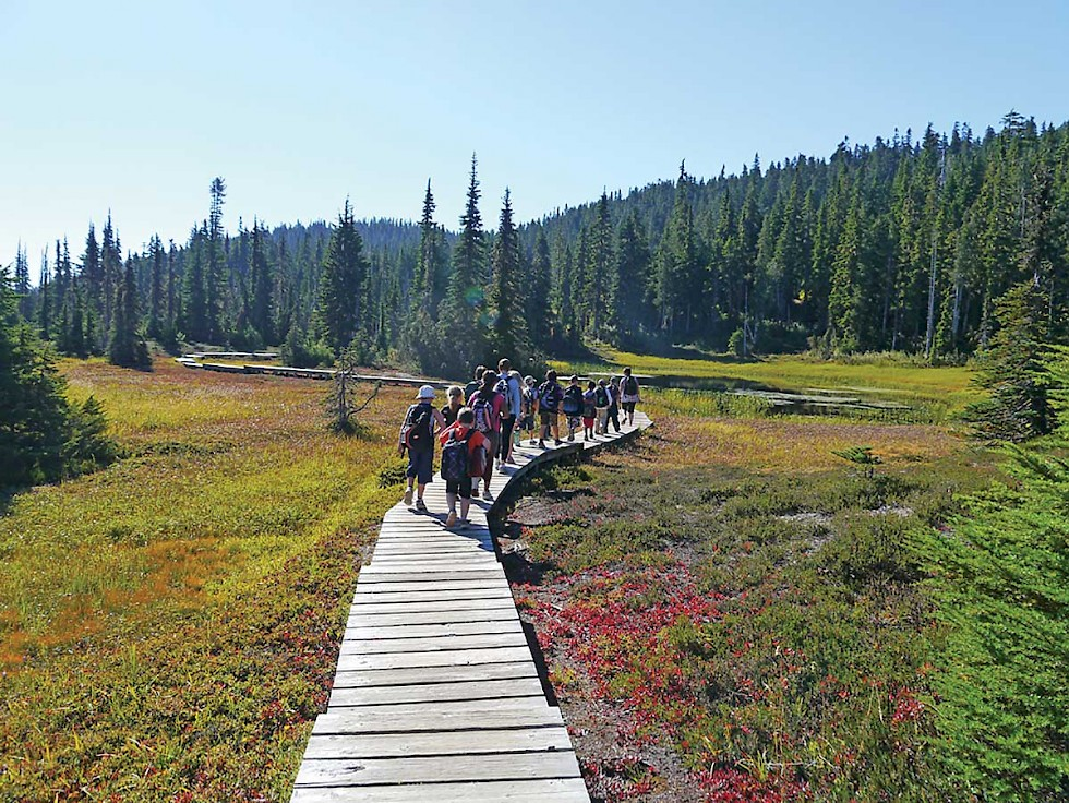 School Group exploring Paradise Meadows in Strathcona Provincial Park.  Photo: Krista Kaptein